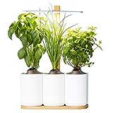 Lilo, Ihr smarter Indoor-Garten ❃ neue Version ❃ Bauen Sie das ganze Jahr über ganz einfach Ihre eigenen frischen Kräuter an ❃ Inklusive Basilikum, Minze und Schnittlauch
