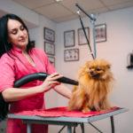 Staubsauger für Tierhaare Test : Die 6 besten Tierhaarstaubsauger