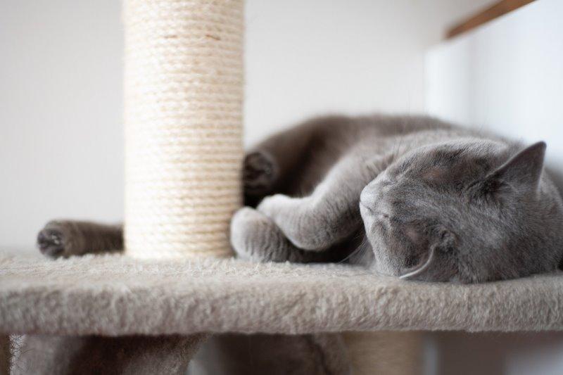 Eine Katze liegt auf einem Kratzbaum und kratzt am Sisalstamm.