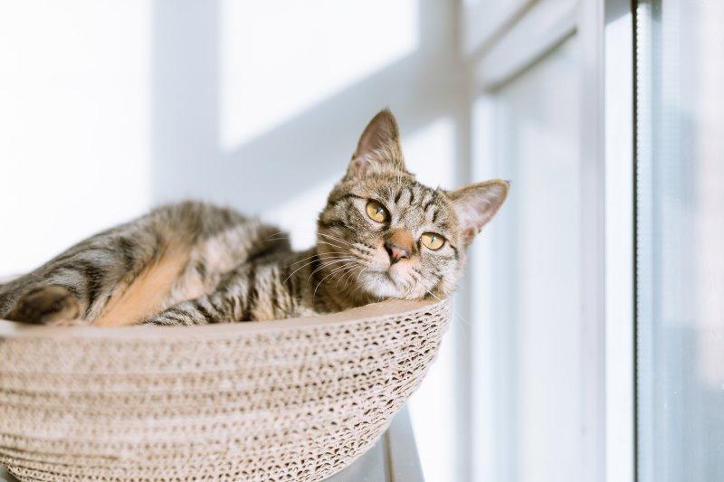 Eine Katze liegt auf einem Kratzbaum.