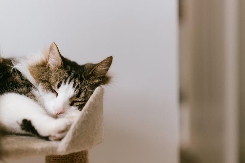 Eine Katze schläft auf einem Kratzbaum aus Plüsch.