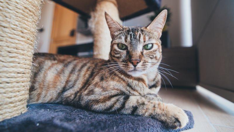 Eine Katze liegt auf der Bodenplatte eines Kratzbaums.