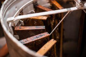 Honigschleuder gefüllt mit Waben