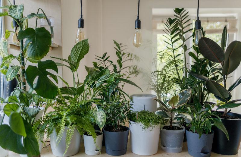 LED Pflanzenlampen im Test
