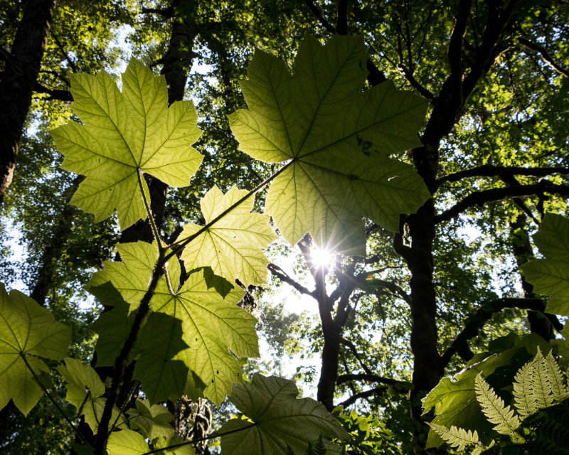 LED Pflanzenlampe im Test