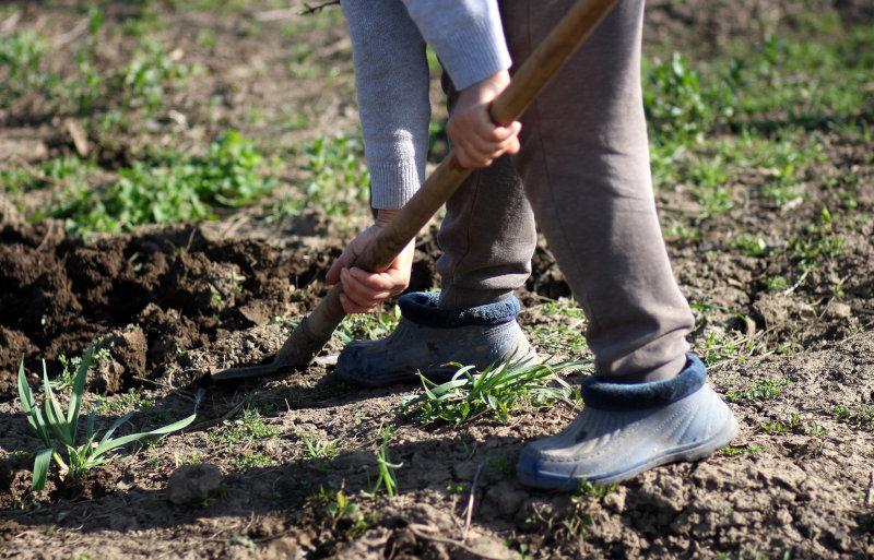 Spaten beim Feldumgraben.