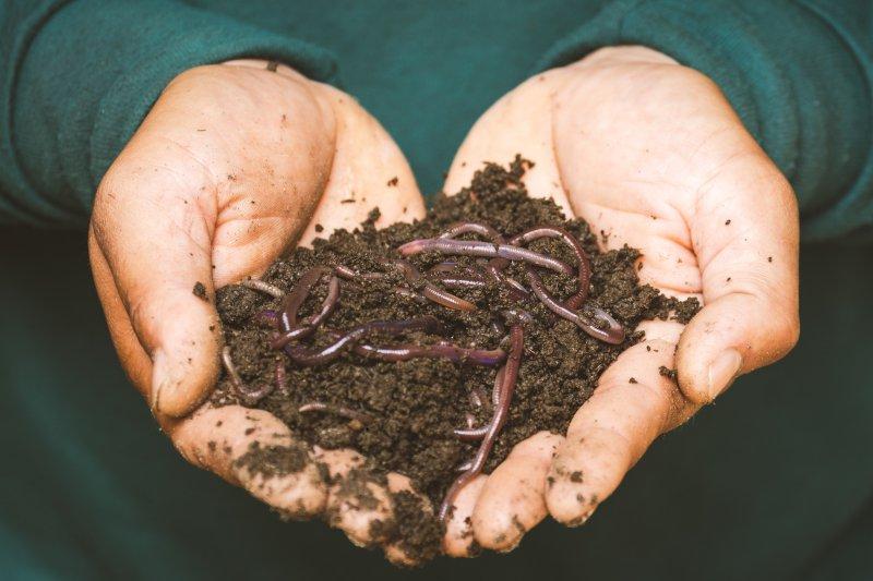 In einem Thermokomposter werden Haushaltsreste mithilfe von Mikroorganismen in Komposterde umgewandelt