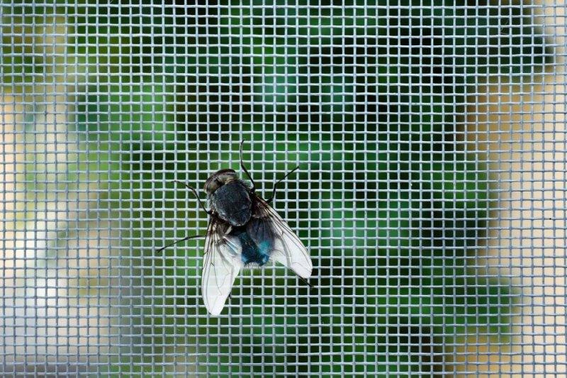 fliege-im-fliegengitter