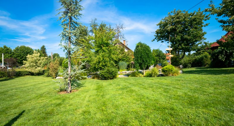 Gesunder Rasen durch Rasenunkrautvernichter