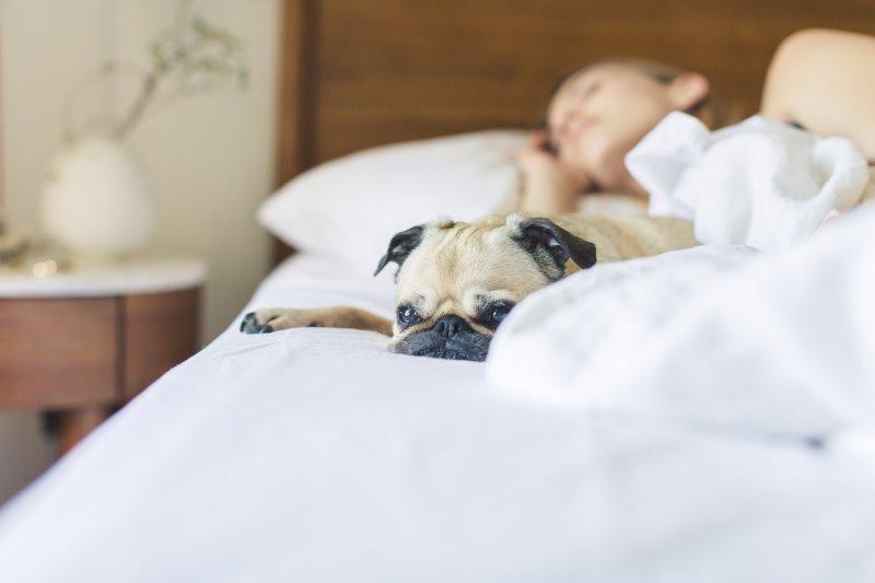 Hund liegt im Bett mit Matratzenschoner