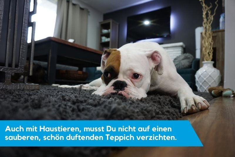 Hund, der auf dem Teppich liegt