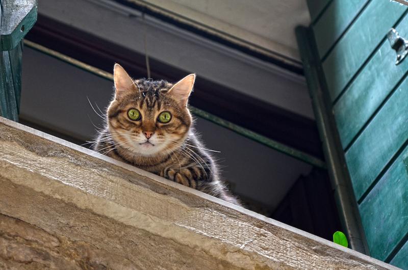 Die Katze starrt vom Fensterbrett in die Tiefe