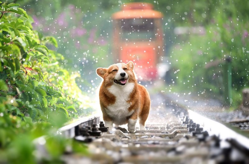 Funkwetterstation Test Hund Regen